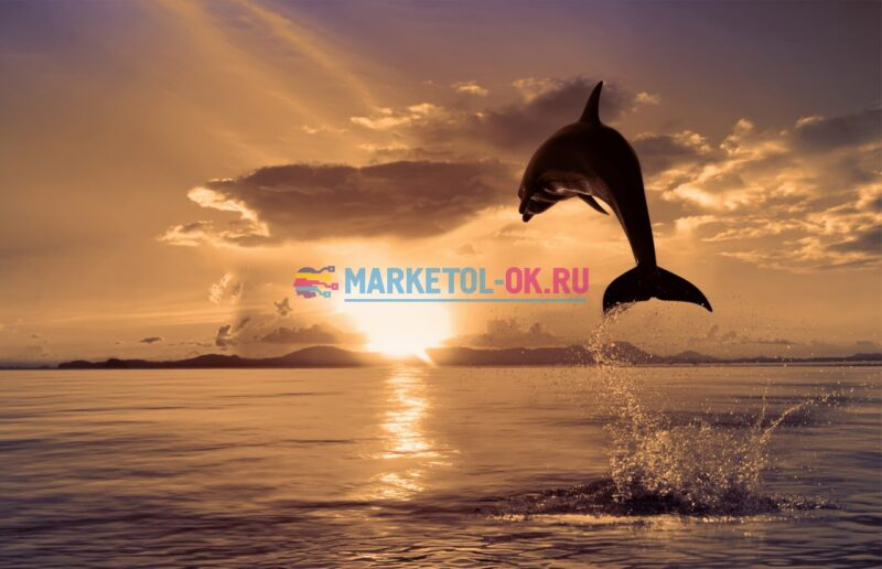 dolphins_47